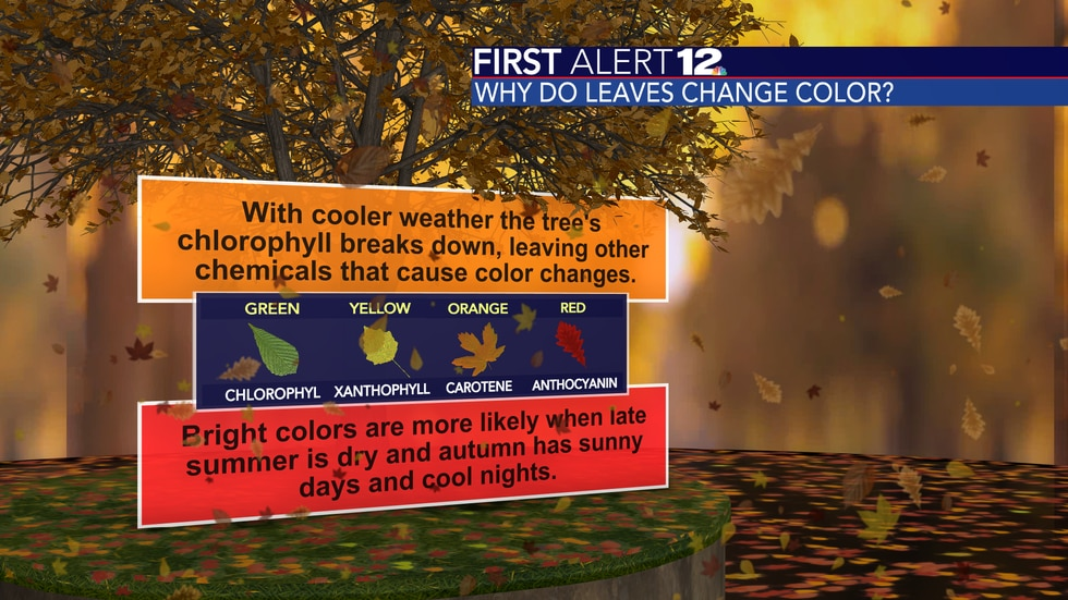 Chemicals other than chlorophyll take over with cooler weather, leading to the change of color.