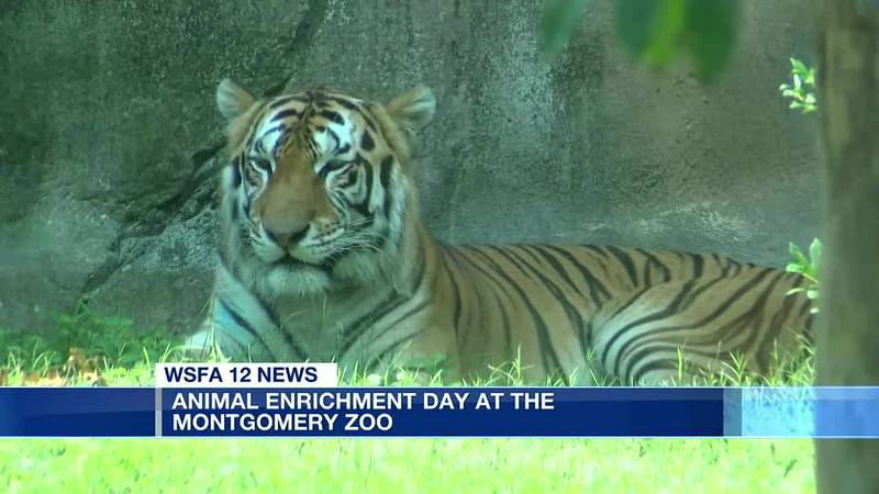 Animal Enrichment Day held at the Montgomery Zoo