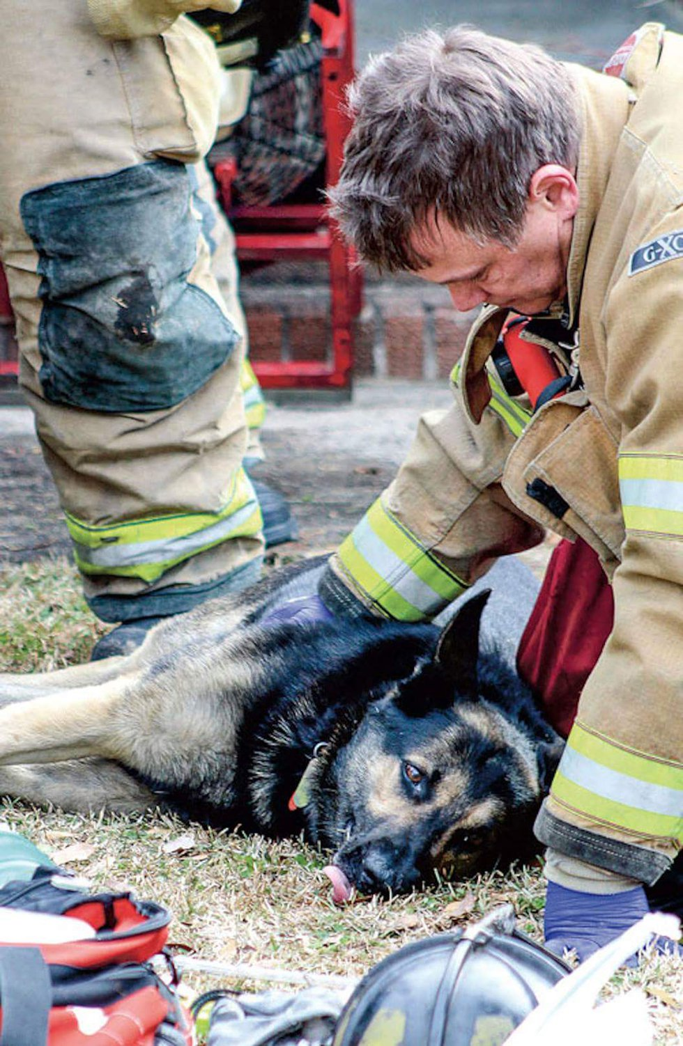 This is Adler, a German Shepherd saved after a house fire. The pup was barely alive with fire...