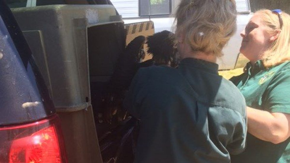 The Alabama Department of Wildlife and Fisheries supervised the release and the eagle took...