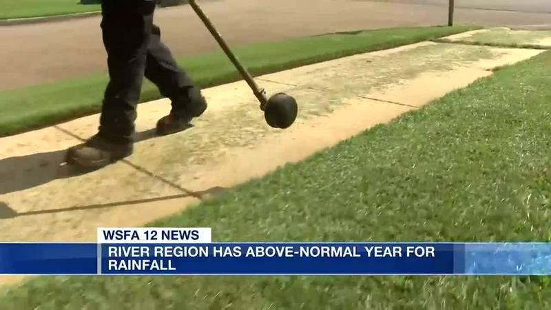 Recent rain impacting local crops, lawn services