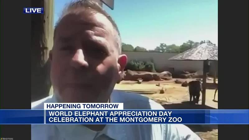 World Elephant Appreciation Day celebration at Montgomery Zoo