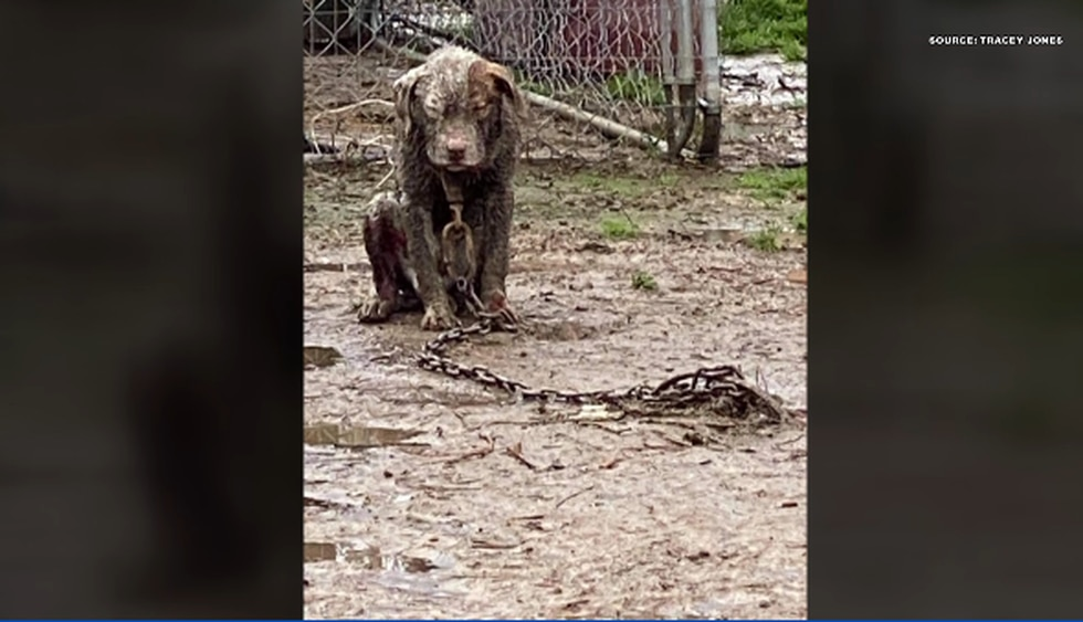 One of the dogs shown was dead.