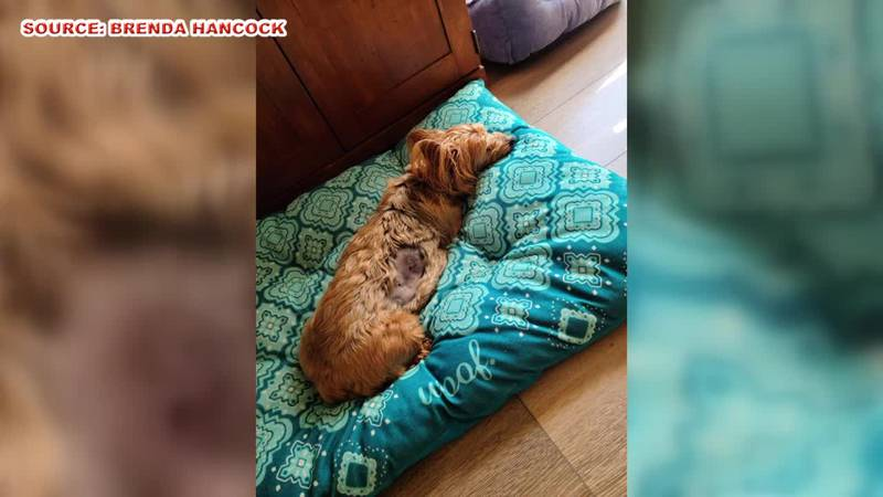 Woman says dog attacked by animal