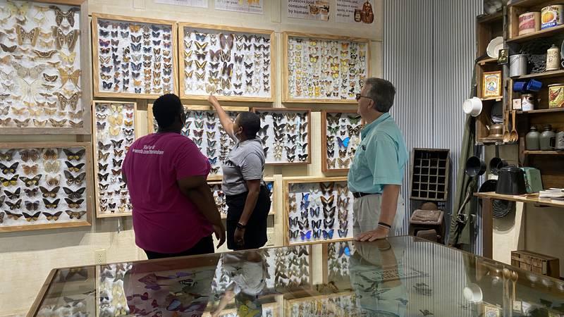 Alabama Gulf Coast Zoo butterfly exhibit