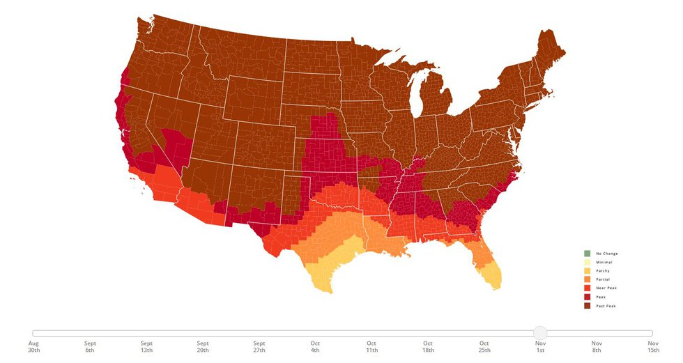 Fall foliage expected by early November.